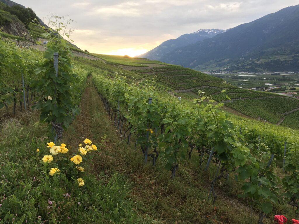 Benoit Dorsaz vigneron bio biodynamie à Fully, Valais